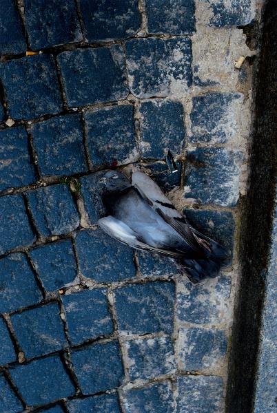 Untitled (Bird), 1998